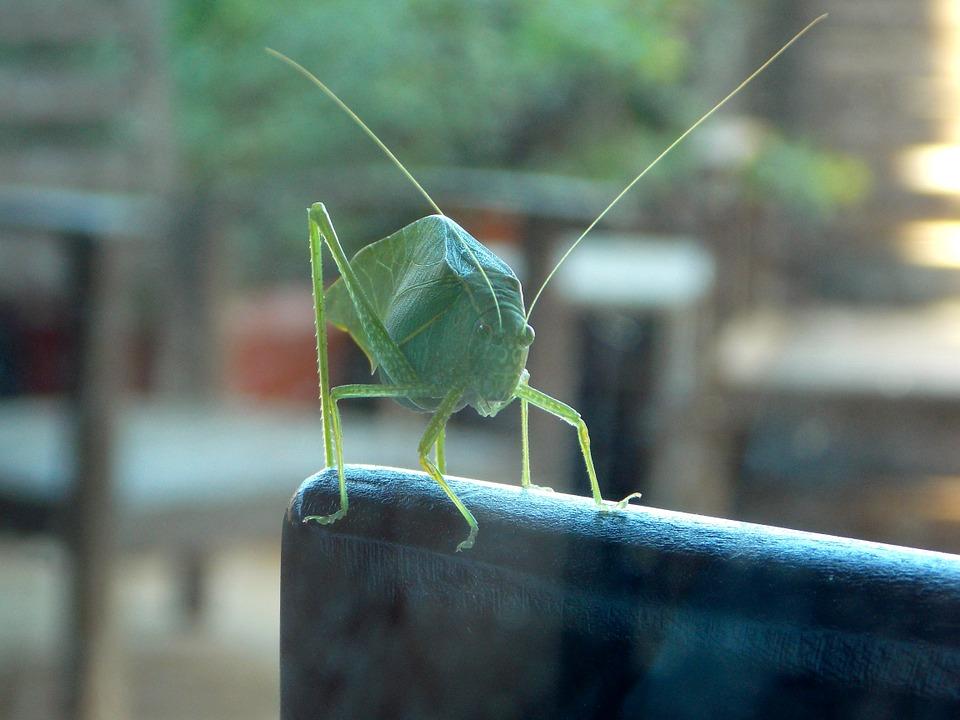cricket-649234_960_720.jpg