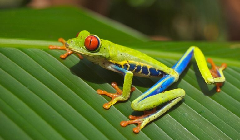 Some Amphibians Look Awesome If They Are Photographed Correctly – 10+ Photos