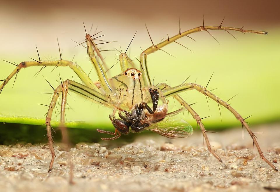 spider-1145105_960_720.jpg