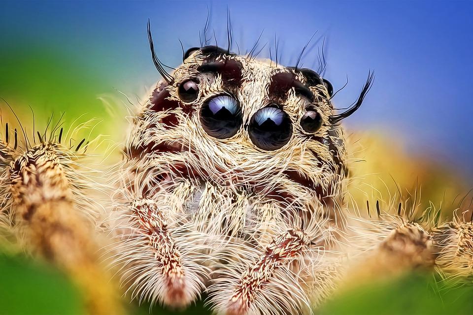 spider-2059718_960_720-1.jpg