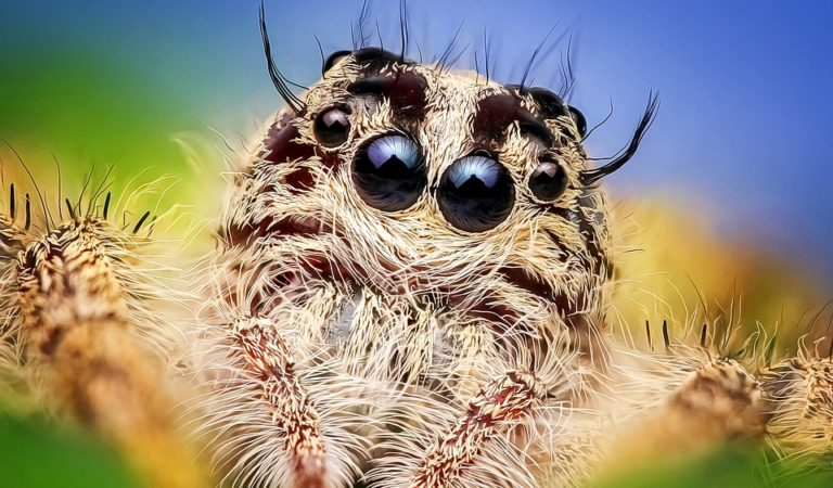 Strange Species of Spiders in The World