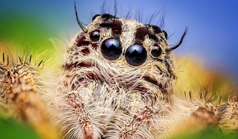Strange Species of Spiders in The World