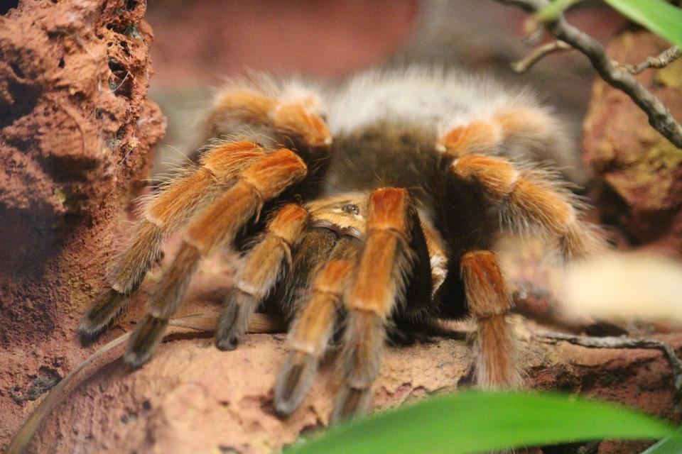 spider-2242940_960_720.jpg