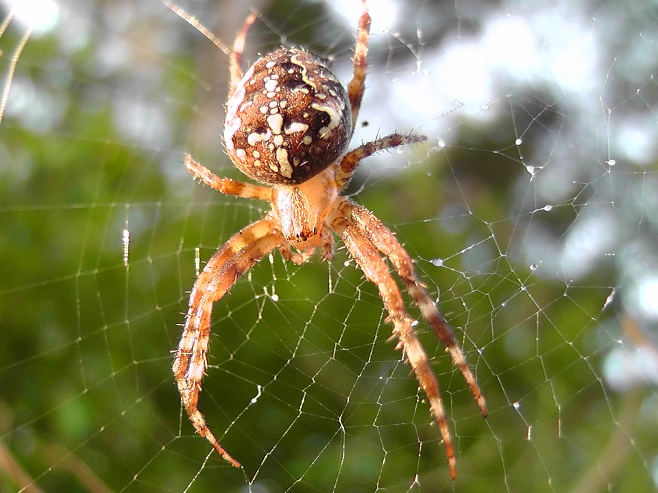 spider-2301811_960_720.jpg