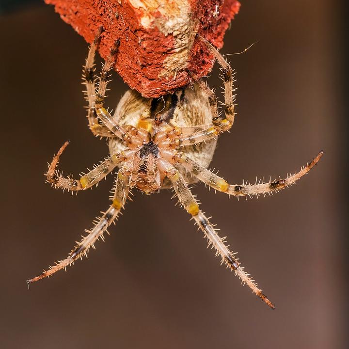 spider-425712_960_720.jpg