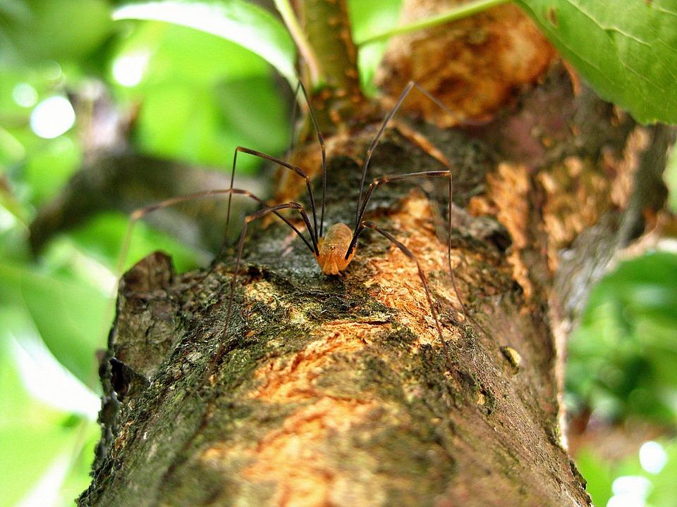 spider-429485_960_720.jpg
