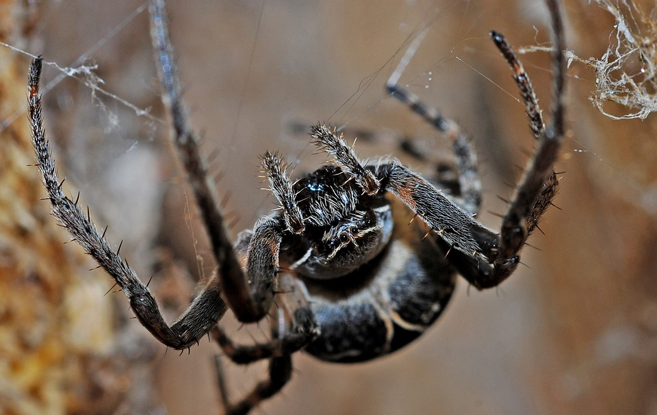 spider-564635_960_720.jpg