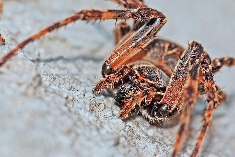 spider-570929_960_720.jpg