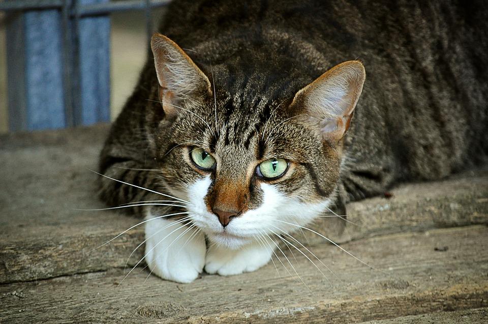 cats-eyes-2671903_960_720.jpg
