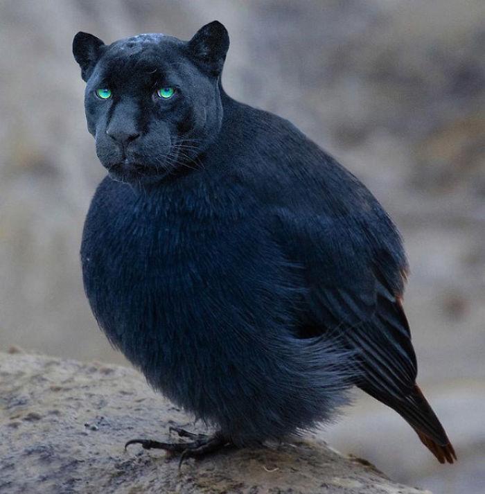 Cat Pets Bird And Then Eats It