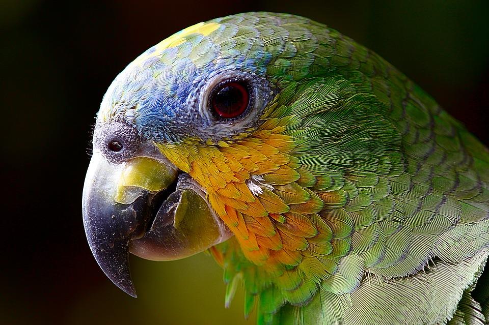 parrot-2756488_960_720.jpg
