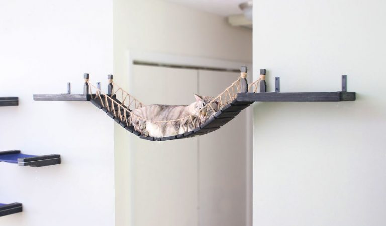 Cat Obsessed With This New Bridge Furniture Made For Her Gives Cat Lovers Something New to Talk About