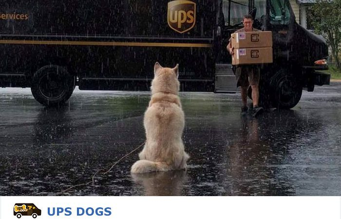 UPS Drivers' Bond With Their Canine Friends is Pleasing Everyone at Facebook