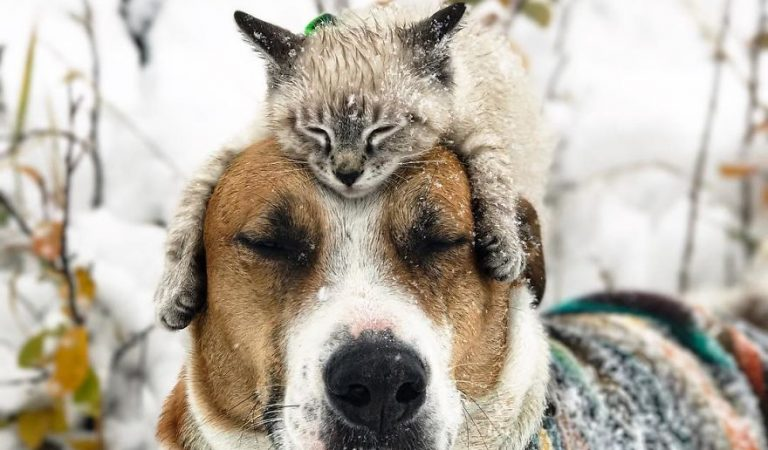 This Cat And Dog Love Travelling Together, And Their Pictures Are Absolute Treat