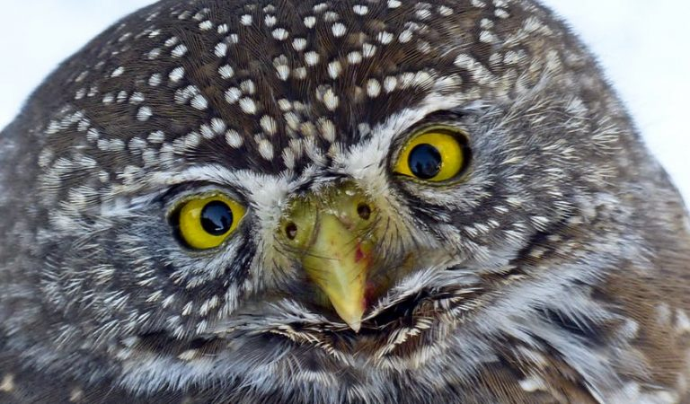 18 Reasons Why Owls Are the Best Animals in The Animal Kingdom