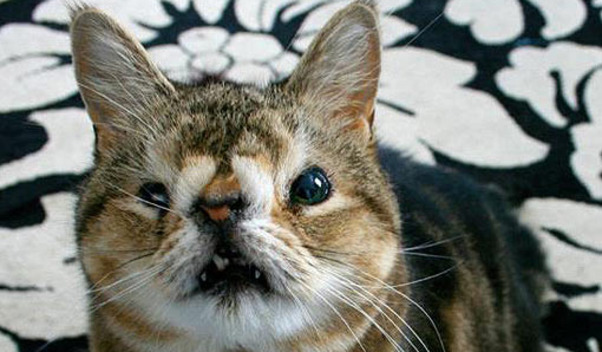 15 Ugliest Cats Of All...