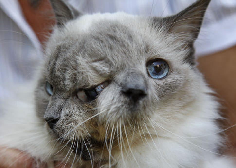 15 Ugliest Cats Of All Time That Will Make You Thankful For Yours