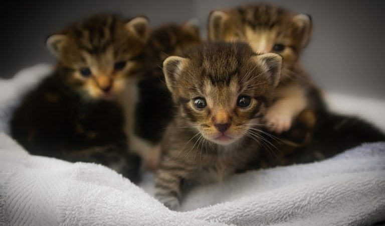 35+Cute Kittens Photos