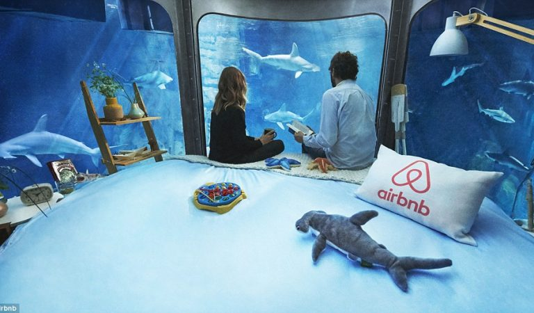 Dangerous AirBnB Room Surrounded By Sharks – What Could be The Experience Like?