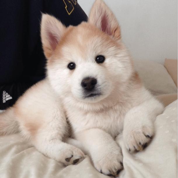 15 Cutest Cross Breed Puppies