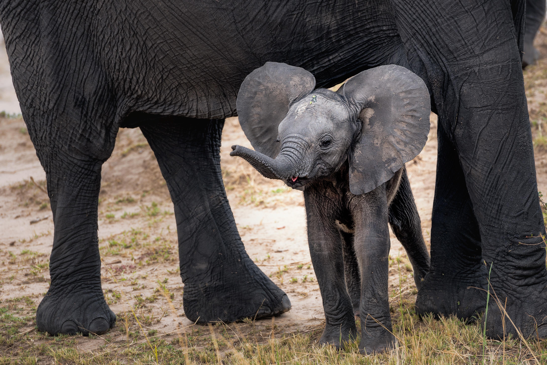 Cute Baby Animal Photos to Love 35+ Photos