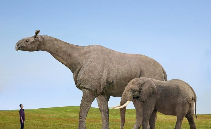 10 Terrifying Prehistoric Animals in Modern Day Forms