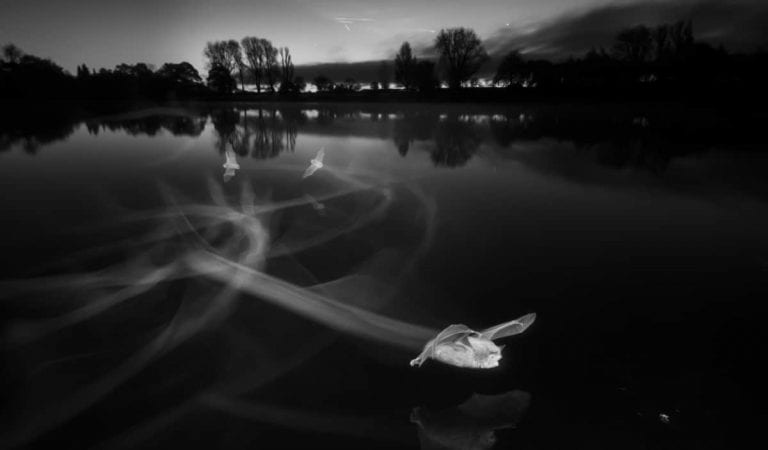 54 British Wildlife Photography Awards Photos