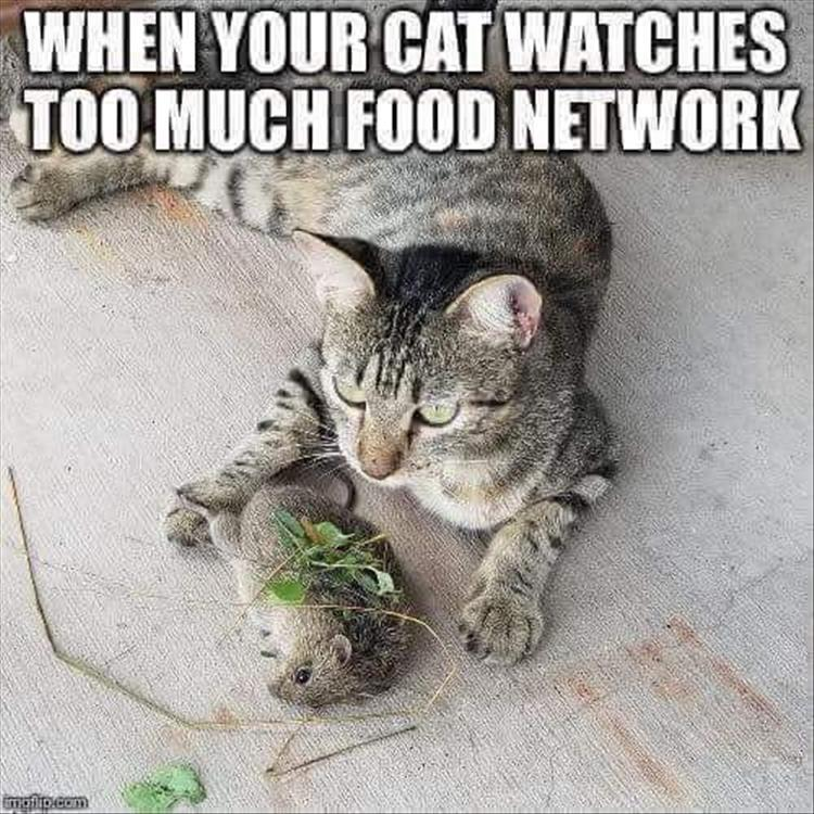 22 Funny Cats 2019