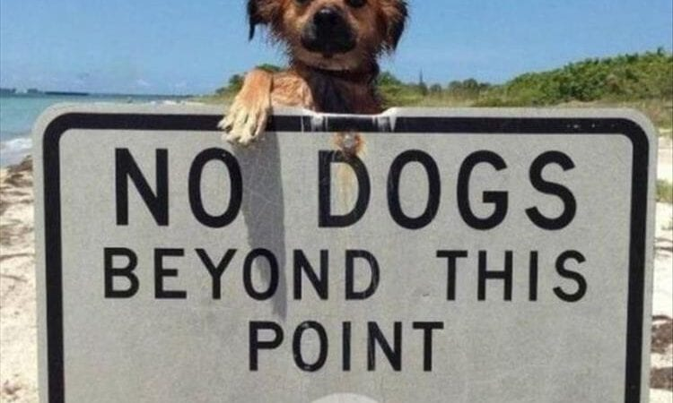 18 Funny Dogs Photos to Give You Reasons to Love Them