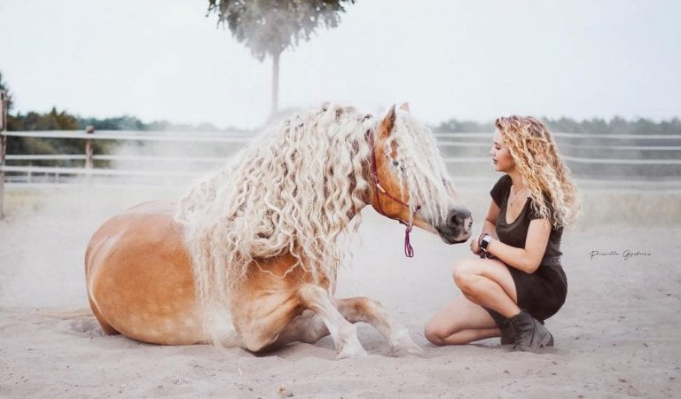 Beautiful Halflinger Horse Rapunzel is Stealing Million of Social Media Hearts