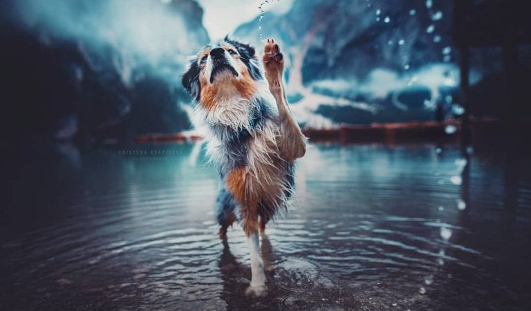 50+ Purrfect Dog Photos By This Photographer Whose Mentor is A Dog