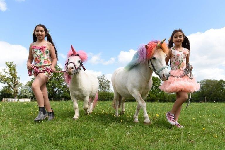 what do unicorns eat