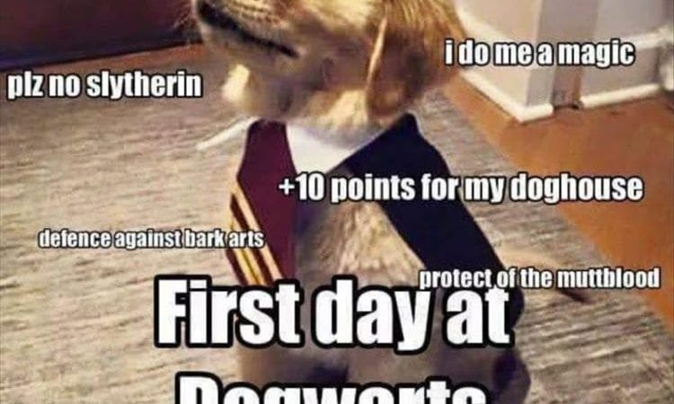 44 Funny Animal Memes With Captions – Animal Photos with Funny Captions