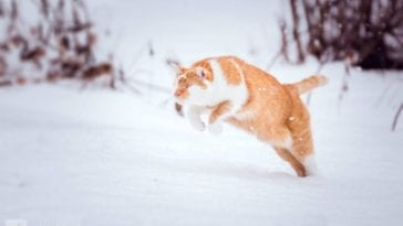 blind cat sees