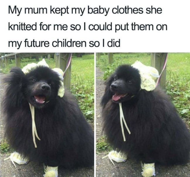 People Are Posting Hilarious Memes to Prove Pets Are ...