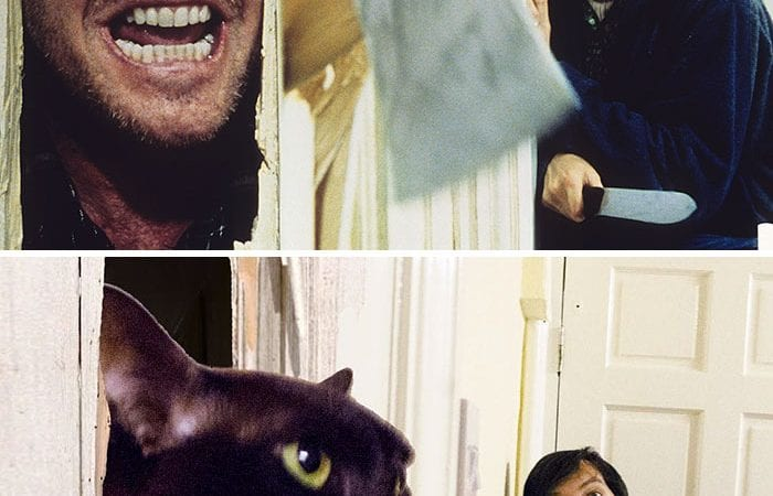 Guy With His Two Cats Recreate Famous Movie Scenes & Fun is Absolutely Next Level