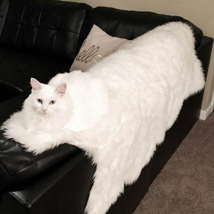 white fluff white rug