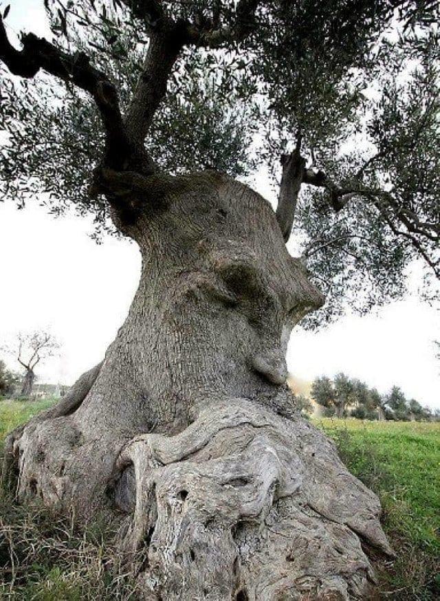 tree looks like old man