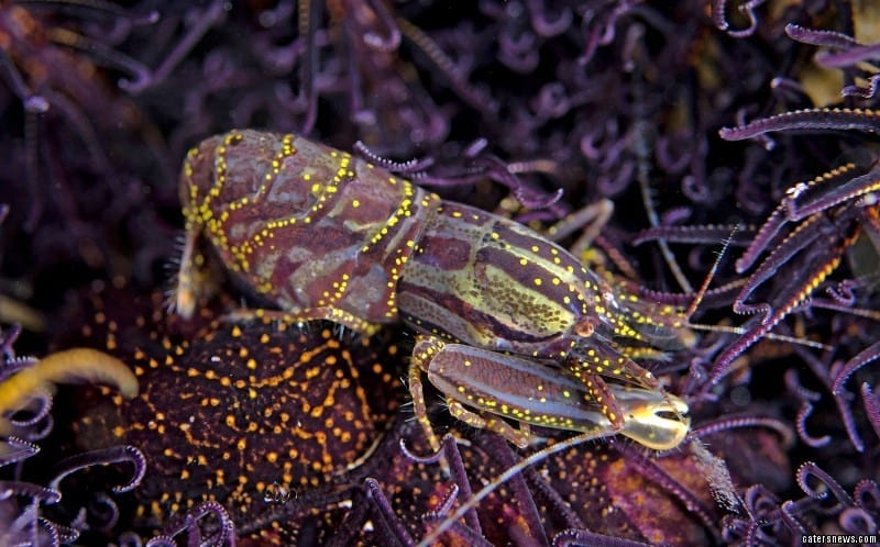 dea sea creatures