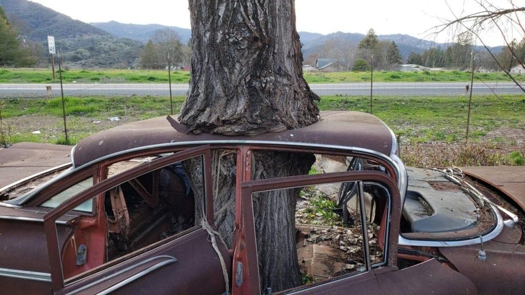 tree sucking old car