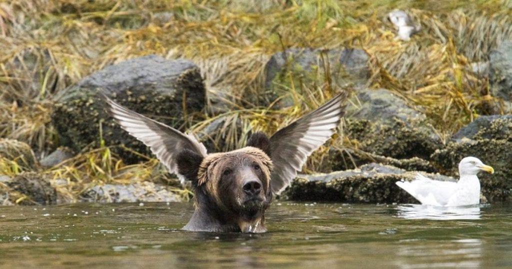 amazing pics of animals