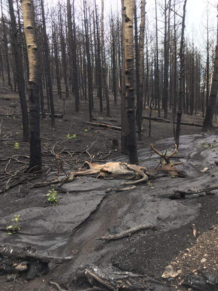 utah fire aftermath