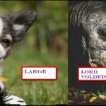 amazing pet names