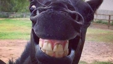 animals laughing photos