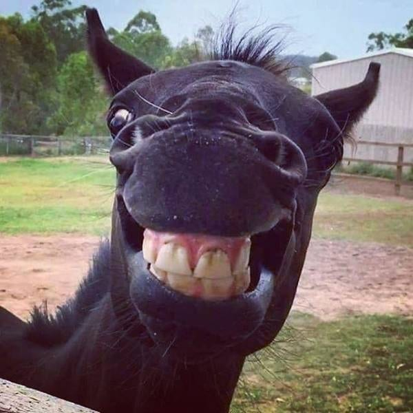 animals laughing photos