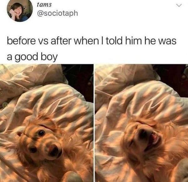 photos of animals smiling