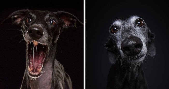 Photographer Features Spanish Greyhounds to Raise Voice Against The Torture of These Dogs When They Are No Use in Hunting