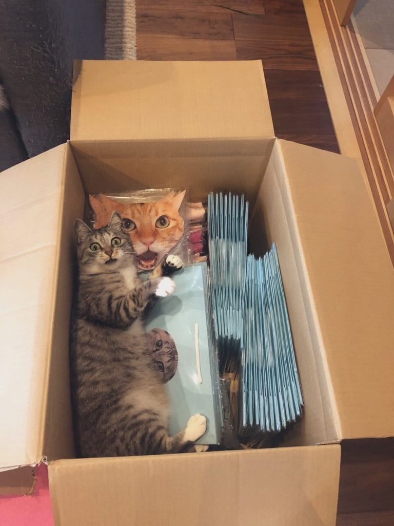 surprised cats-1