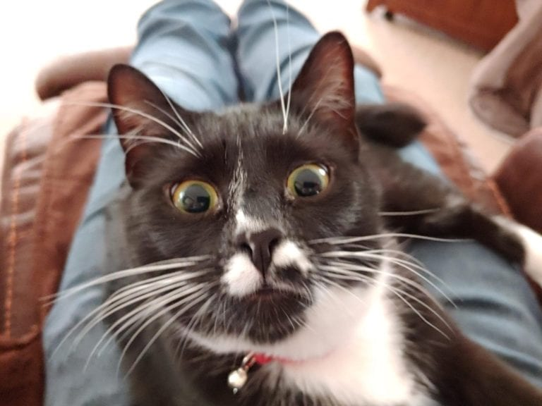 surprised cats-10