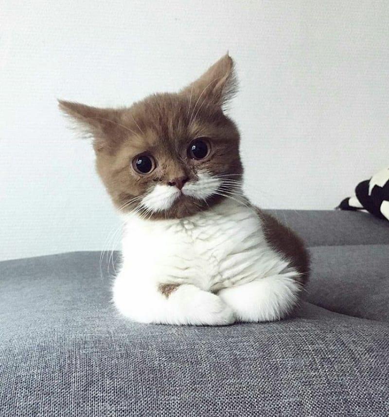 surprised cat faces